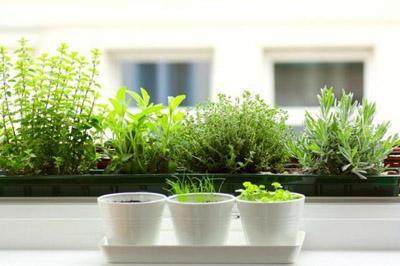 Začimbe in zelišča