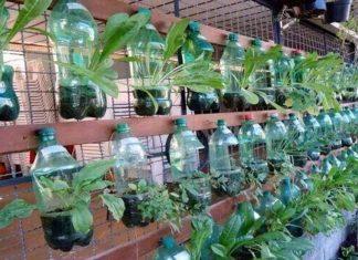 vrt iz plastenk