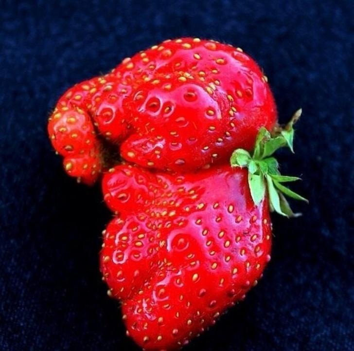 sadja in zelenjave
