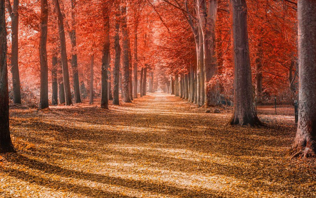 Forest Leaves Trees Autumn Path  - Skitterphoto / Pixabay